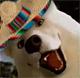 HSSpacewizard's avatar