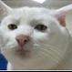 chizuk's avatar