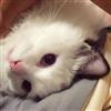 KittyB52's avatar