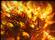 user-19720519's avatar