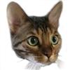 whakka1's avatar