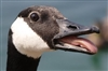 FATHER_GOOSE's avatar