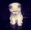 Robot_Kitty's avatar