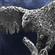 eagle_dan's avatar