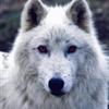 TargusCZ's avatar
