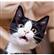 henomar's avatar