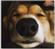 TazdingoHS's avatar