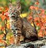 Mountaincat's avatar