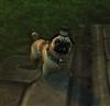 cluelesspug's avatar