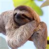 Bradipo322's avatar