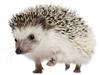 fe7er's avatar