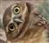 BorisTupov's avatar