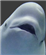 Beachedwhale's avatar