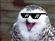 user-100026756's avatar