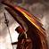 Hadin's avatar