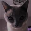 adamz1997's avatar