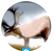 user-100110225's avatar