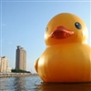 Bathduck11's avatar