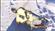 ZBOZZ's avatar