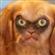 Blue6erry's avatar