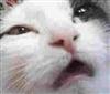 MomoUk's avatar
