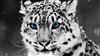 Arpax's avatar
