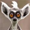 AnimalHS2's avatar