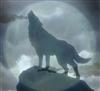 SRBWolf's avatar