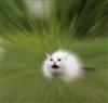 SCREAMING_CAT's avatar