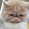 PandaPanda69's avatar