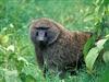 baboen's avatar