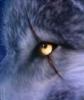 W0LF0S's avatar