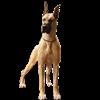 ldanes's avatar
