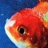 GalacticGoldFish's avatar