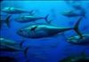 Bluefin's avatar