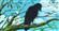 M4XXX's avatar