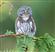 SemenTheDemon's avatar