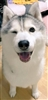 momojomurs's avatar