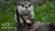 Alucard57's avatar