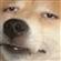 H20-Melone's avatar