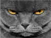Ecxema's avatar