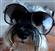 krakatua's avatar